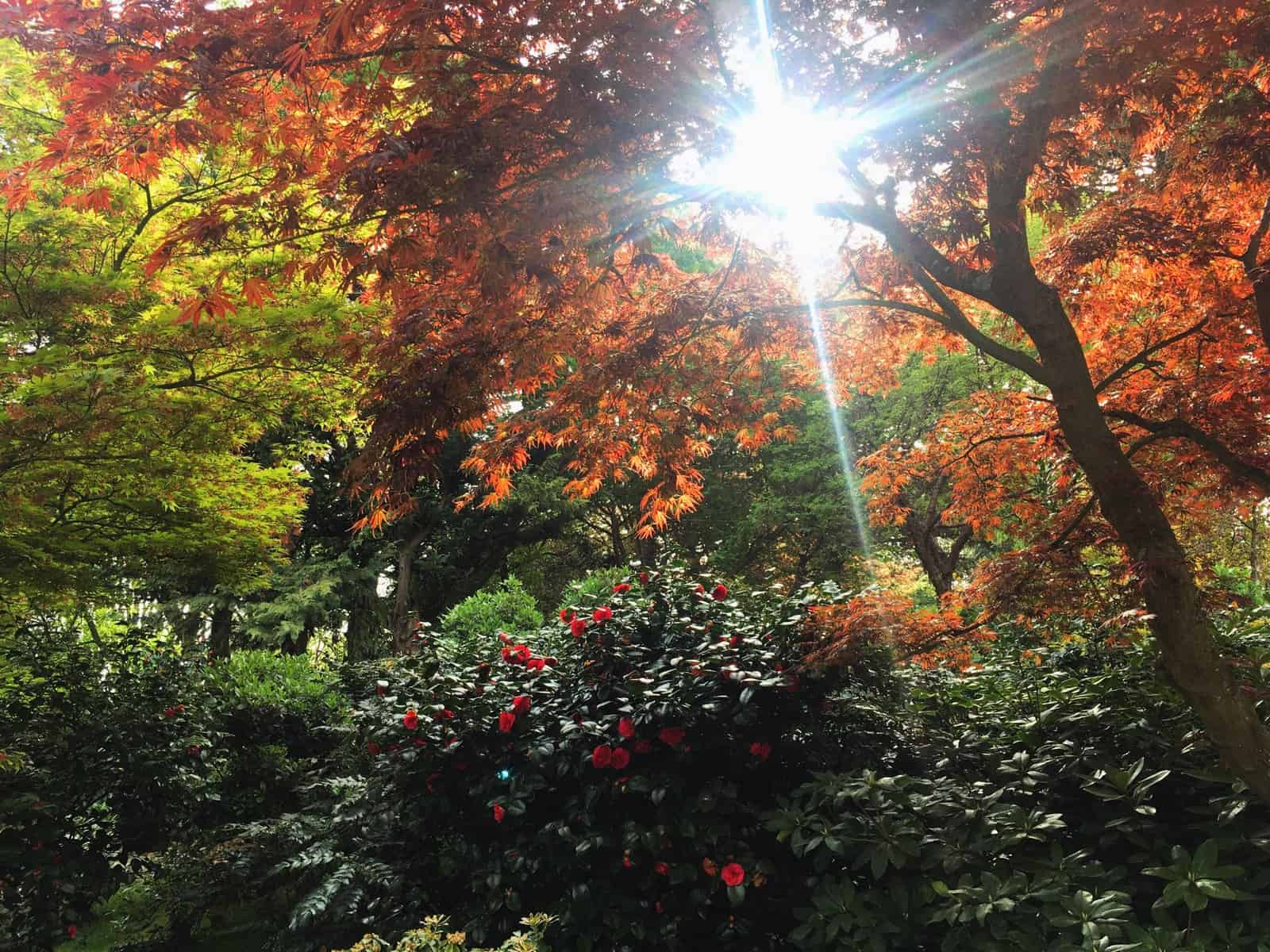 Londres: Kyoto Garden, un jardin secret